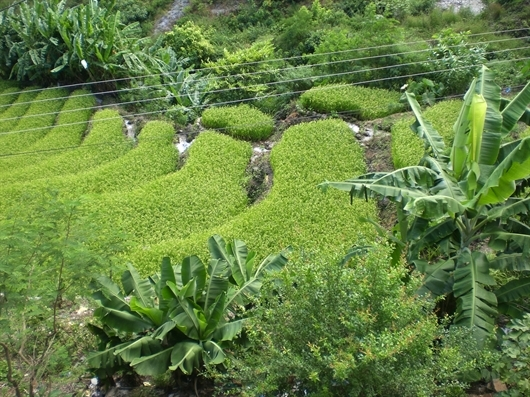 agricultural field in optimization papers research